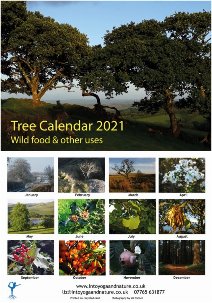 Trees wild food calendar
